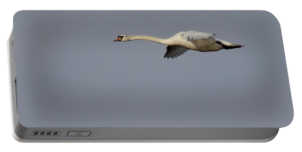 Birds Portable Battery Charger featuring the photograph First Day Of Spring Swan2 by Christopher Plummer
