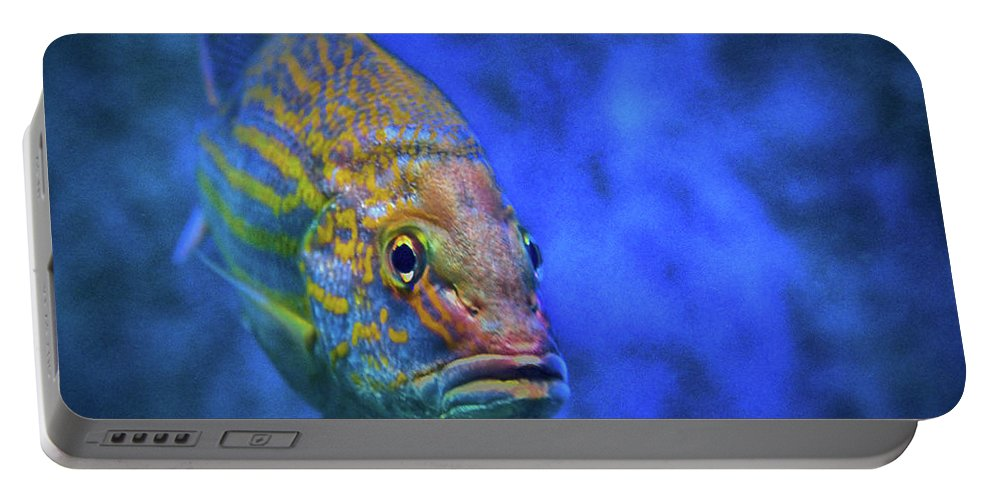 Fish Frown Portable Battery Charger featuring the photograph Fish Frown Story by Don Columbus