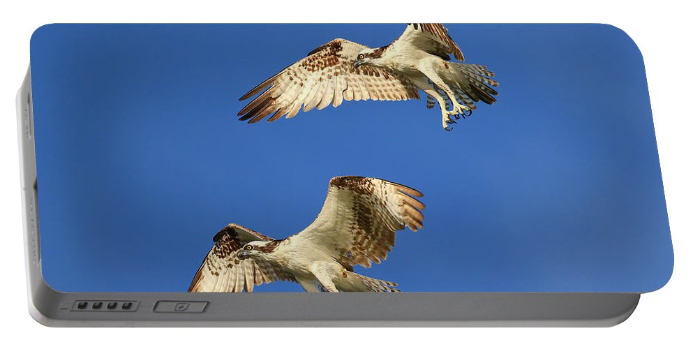 Bird Portable Battery Charger featuring the photograph Fishing Tandem by John Absher