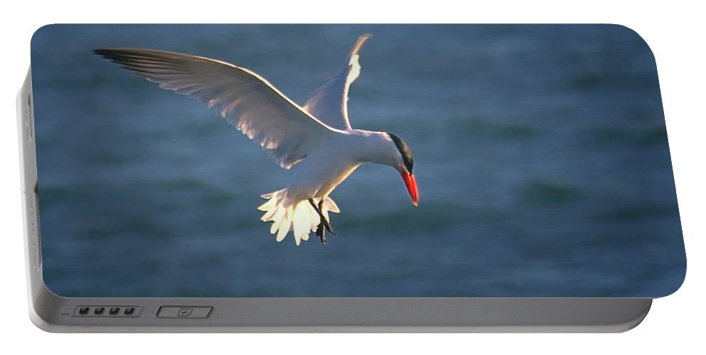 Wildlife Portable Battery Charger featuring the photograph Fishing Tern by Albert Seger