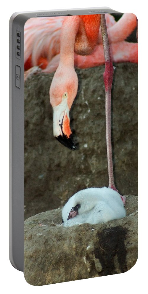 Pink Flamingo Portable Battery Charger featuring the photograph Flamingo And Chick by Anthony Jones