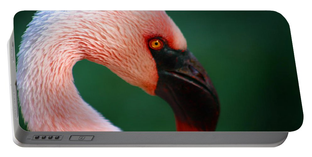 Flamingo Portable Battery Charger featuring the photograph Flamingo by Anthony Jones