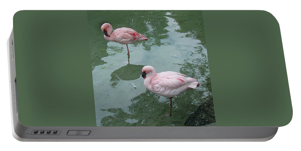 Wildlife Portable Battery Charger featuring the photograph Flamingoes Posing by Shirley Heyn
