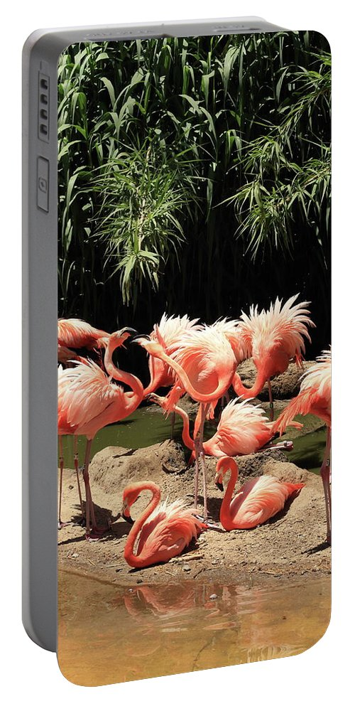 Flamingo Portable Battery Charger featuring the photograph Flamingos by David Diaz