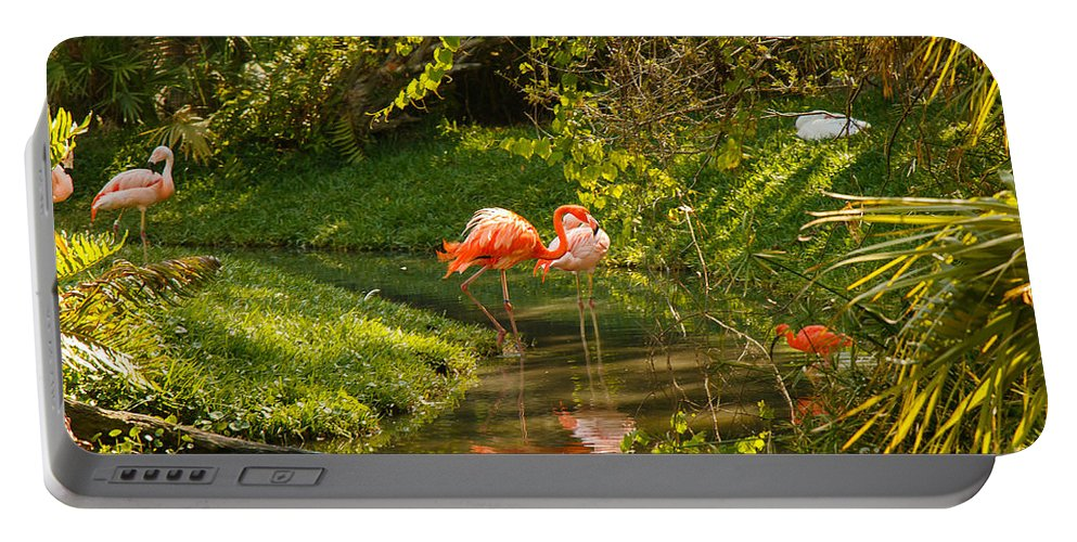 Birds Portable Battery Charger featuring the photograph Flamingos Wading by Les Greenwood