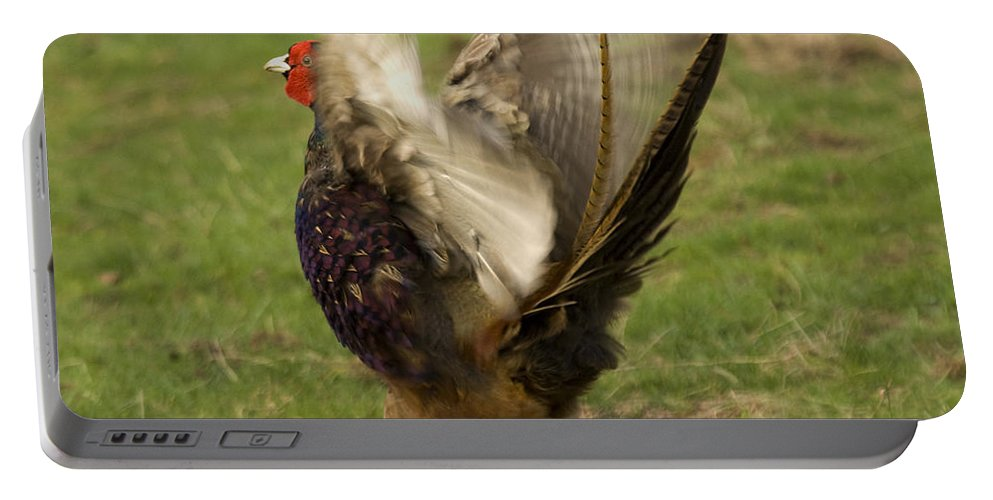 Pheasant Portable Battery Charger featuring the photograph Flap Flap by Angel Ciesniarska