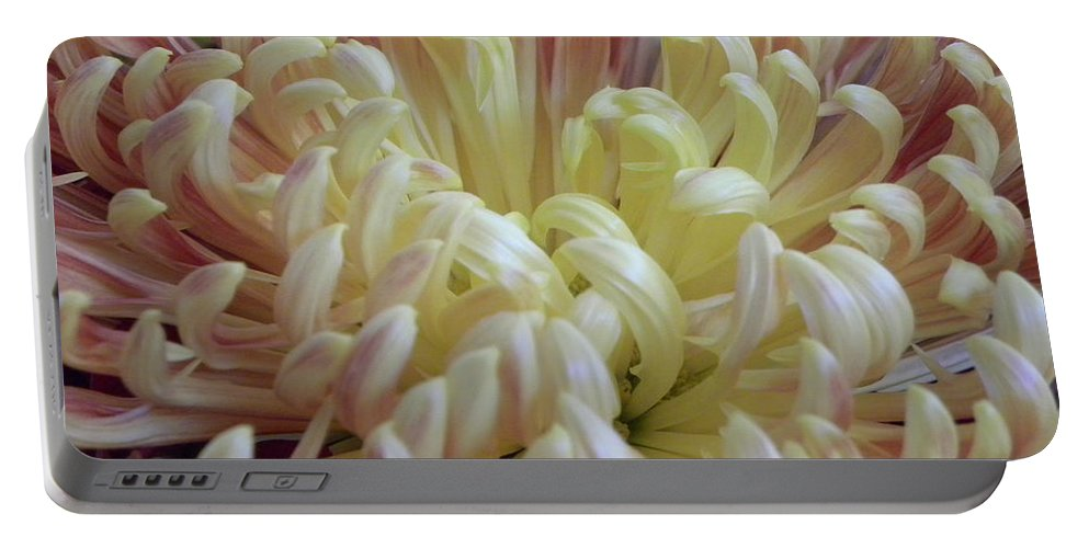 Nature Portable Battery Charger featuring the photograph Curled Flower by Shannon Turek