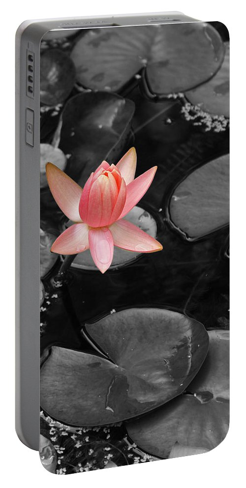 Lily Pond Water Lily Pnk Green Photograph Photography Digital Art Portable Battery Charger featuring the photograph Floating Pink by Shari Jardina