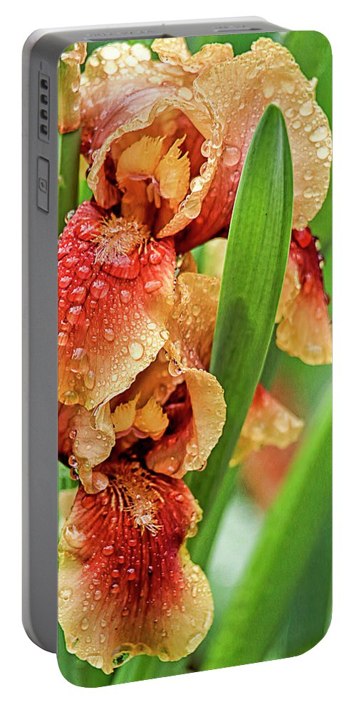 Recent Portable Battery Charger featuring the photograph Floral Bearded Iris With Rain Drops by Geraldine Scull