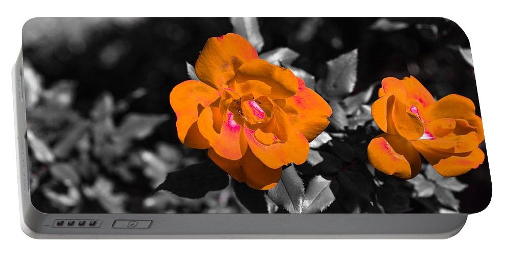 Flowers Roses Chris Frasier Portable Battery Charger featuring the photograph Floral Beauty by Chris Frasier