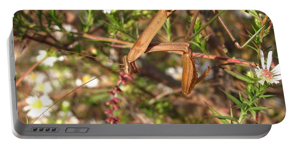 Praying Mantis Images Wild Flower Prints Entomology Savage Garden Biodiversity Preservation Meadow Ecosystem Natural Ecology Predatory Insects Maryland Mantis Brown Mantis Floral Mantis Portable Battery Charger featuring the photograph Floral Mantis by Joshua Bales