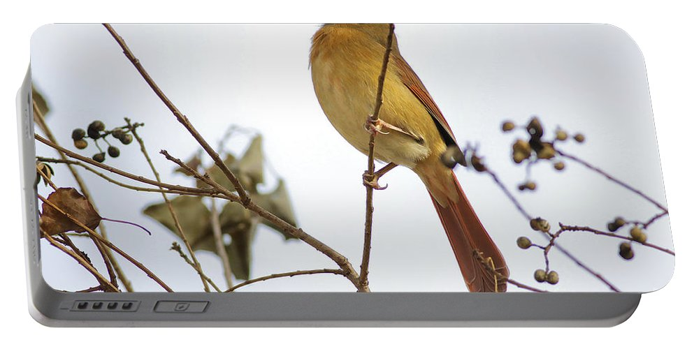 Cardinal Portable Battery Charger featuring the photograph Florida Cardinal by Deborah Benoit