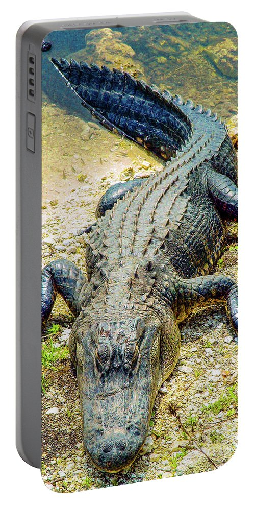 Florida Portable Battery Charger featuring the photograph Florida Gator 2 by Tommy Anderson