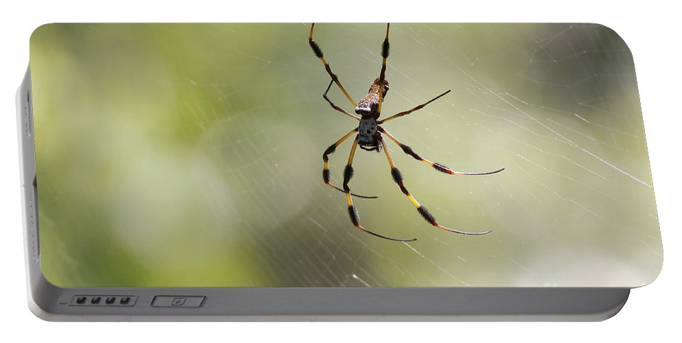 Spider Portable Battery Charger featuring the photograph Florida Spider by Deborah Benoit