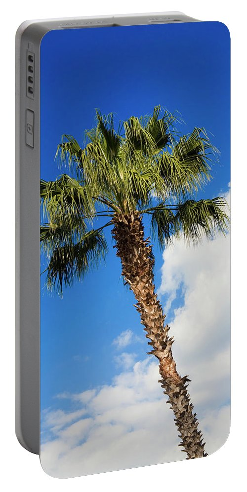 Florida State Tree Portable Battery Charger featuring the photograph Florida State Tree by Diane Macdonald