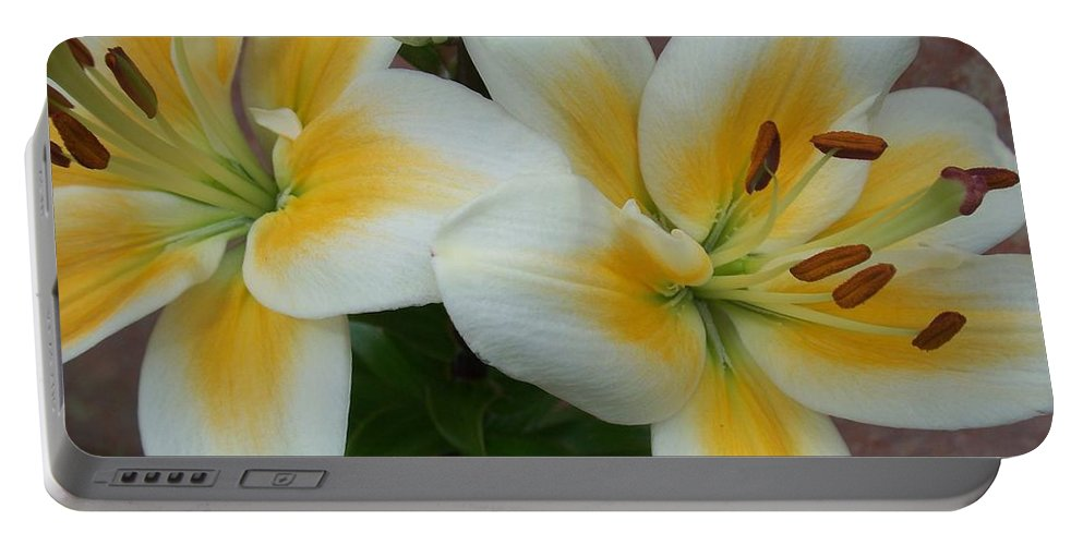 Flower Portable Battery Charger featuring the photograph Flower Close Up 5 by Anita Burgermeister