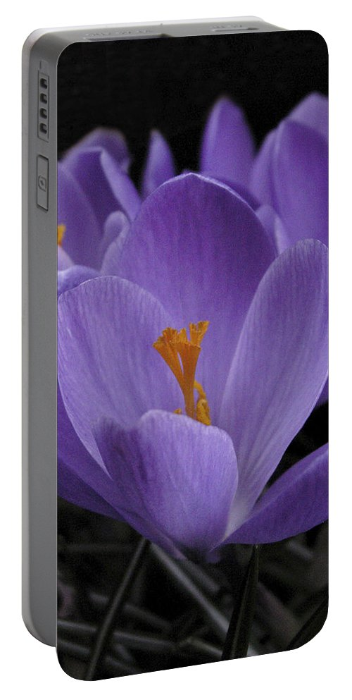 Flowers Portable Battery Charger featuring the photograph Flower Crocus by Nancy Griswold
