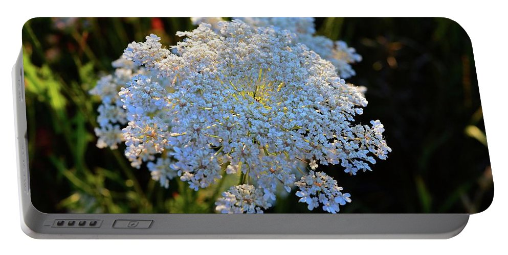Queen Anne's Lace Portable Battery Charger featuring the photograph Flower In The Field by Lyle Crump
