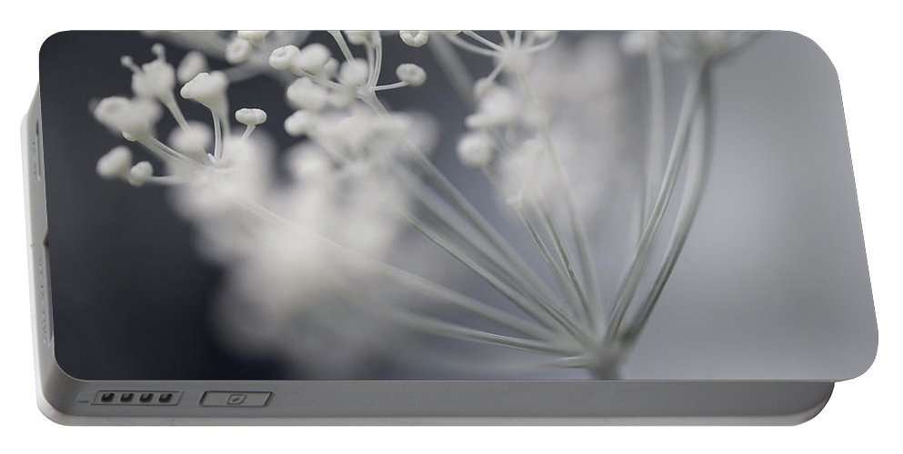 Dill Portable Battery Charger featuring the photograph Flowering Dill Cluster by Elena Elisseeva