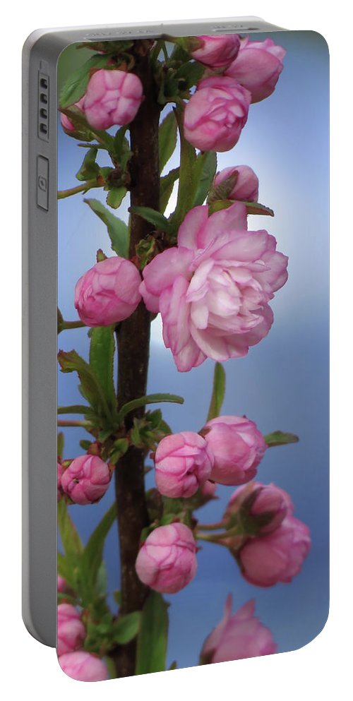 Flowering Almond Portable Battery Charger featuring the photograph Flowering Pink On Blue by MTBobbins Photography