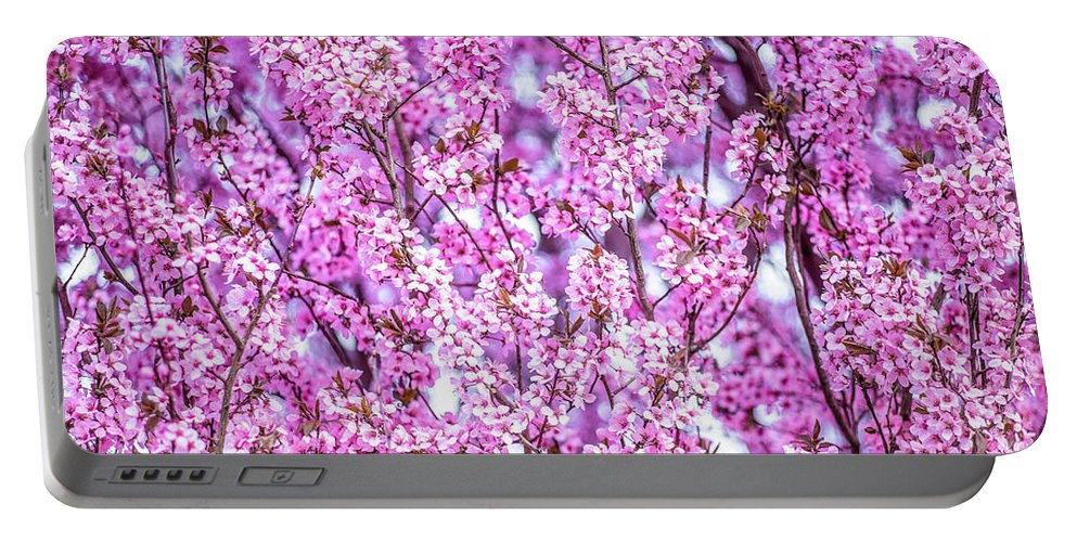 Flower Portable Battery Charger featuring the photograph Flowering Plum Blossoms. by Greg Chapel