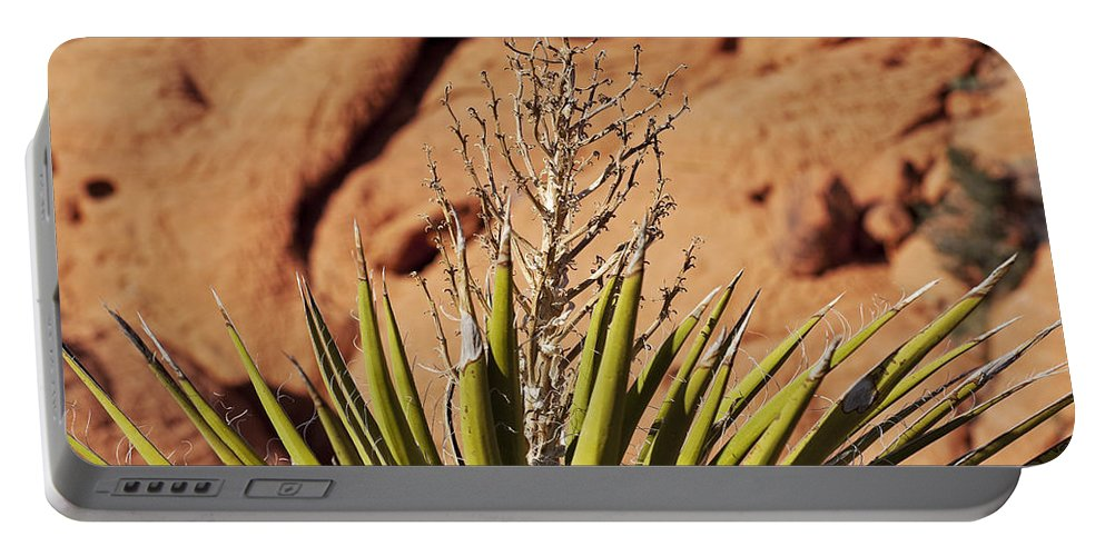 Yucca Plant Portable Battery Charger featuring the photograph Flowerless by Kelley King
