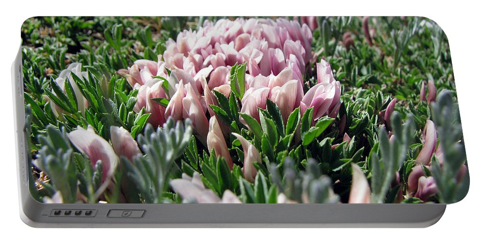 Flowers Portable Battery Charger featuring the photograph Flowers In The Alpine Tundra by Amanda Barcon