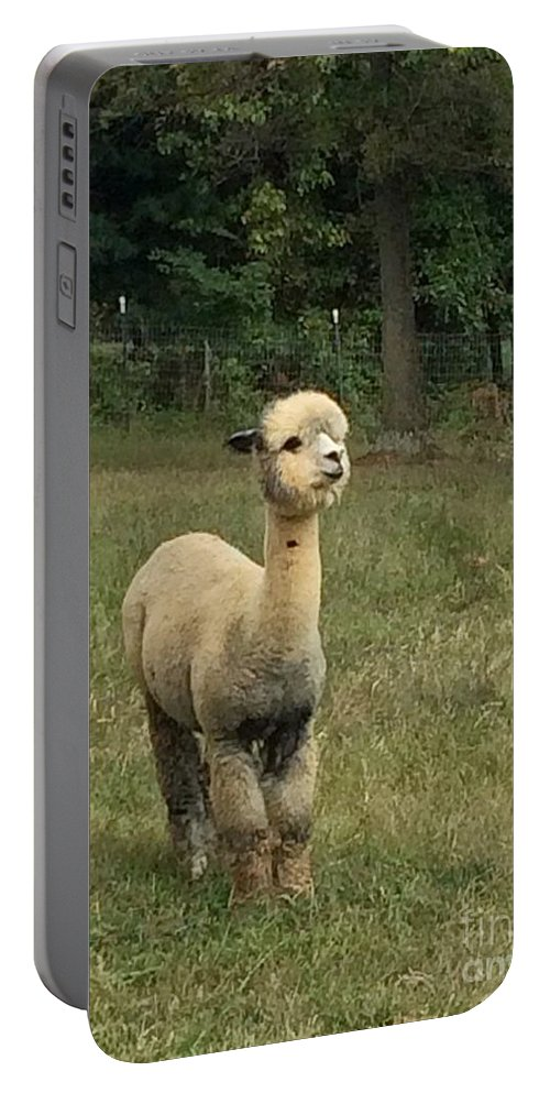 Alpaca Portable Battery Charger featuring the photograph Fluffy Alpaca by Megan Thompson