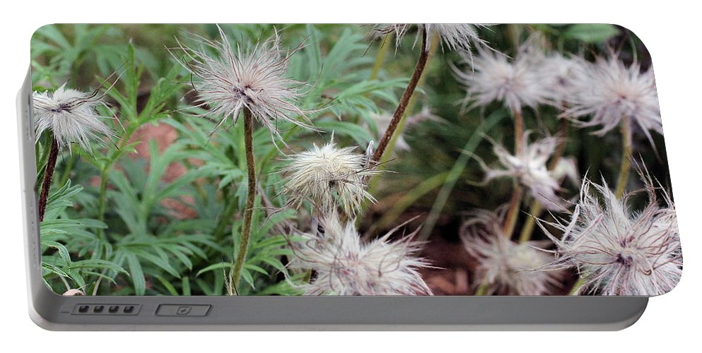 Flower Portable Battery Charger featuring the photograph Fluffy Flowers by Smilin Eyes Treasures
