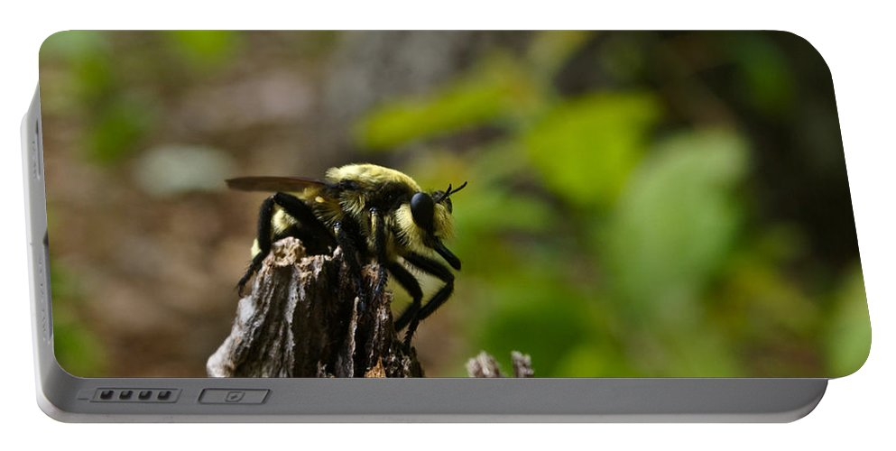 Fly Portable Battery Charger featuring the photograph Fly On Mountain by Douglas Barnett