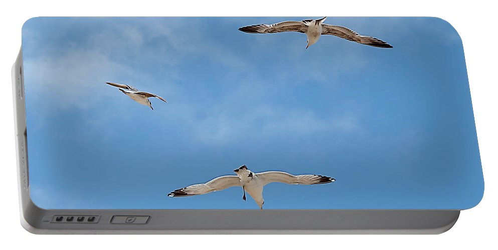 Bird Portable Battery Charger featuring the photograph Flying By by Jay Billings
