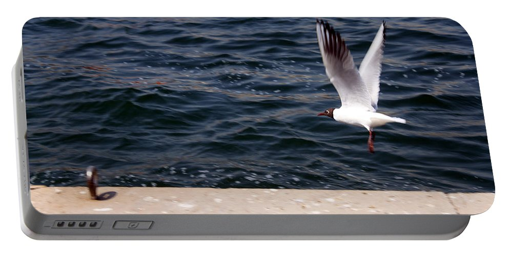 Uae Portable Battery Charger featuring the photograph Flying Free by Munir Alawi