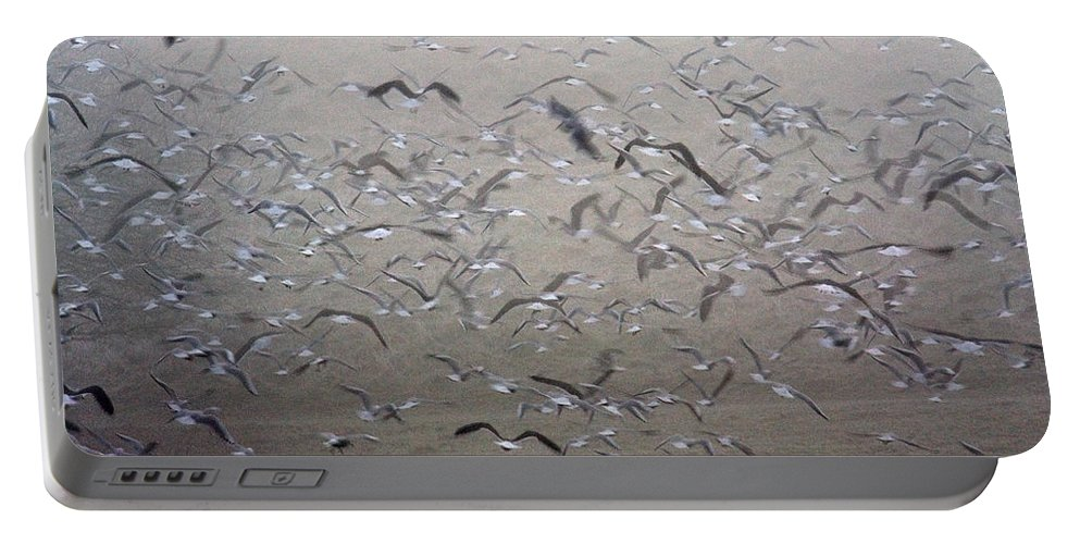 Flight Portable Battery Charger featuring the photograph Flying Gulls by Bob Kemp