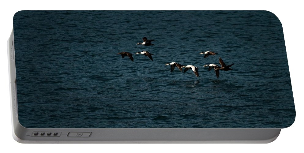 common Eider Portable Battery Charger featuring the photograph Flying Under The Radar by Paul Mangold