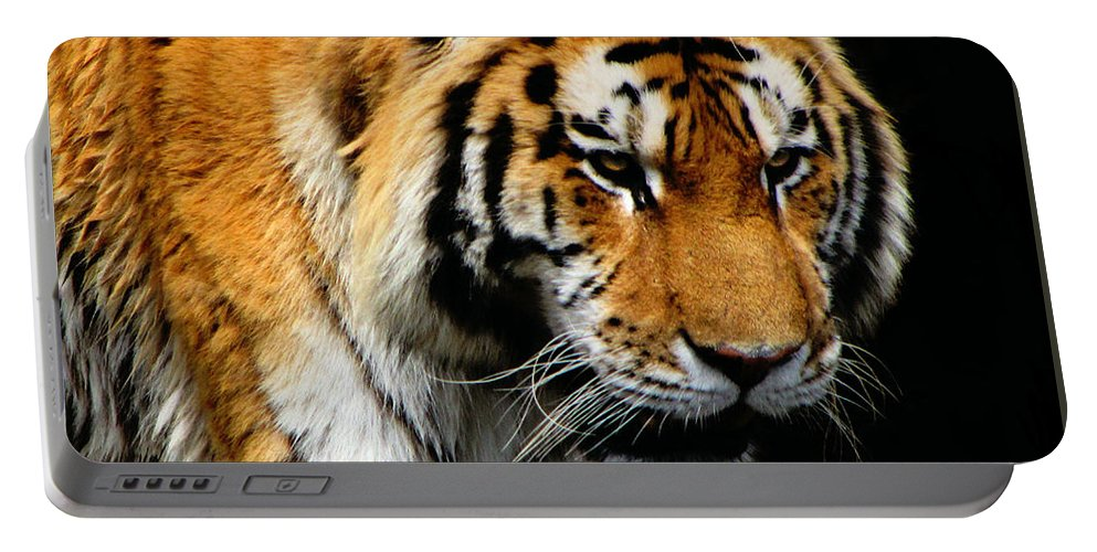 Tiger Portable Battery Charger featuring the photograph Focused by September Stone