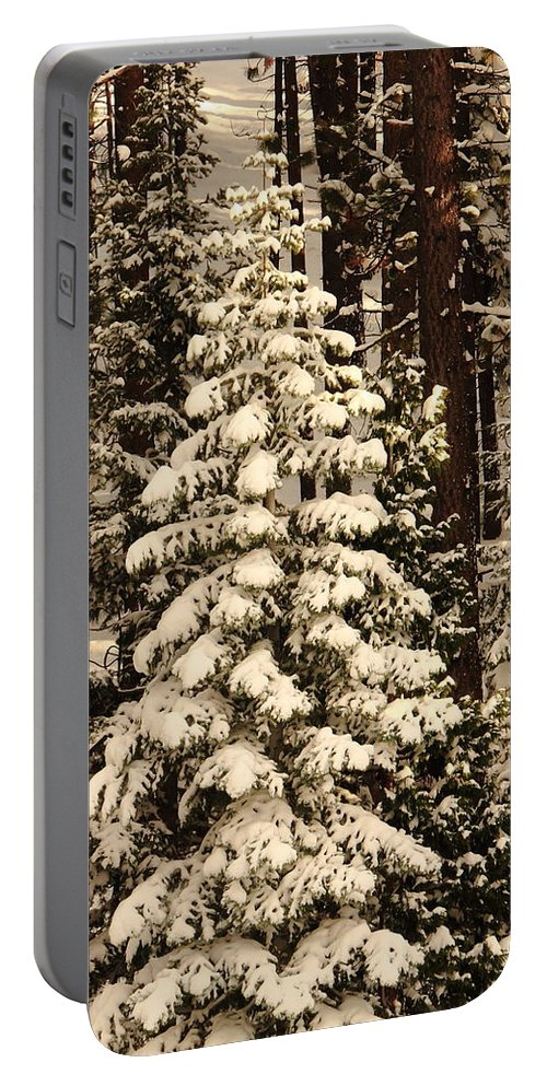 Fresh Snow Portable Battery Charger featuring the photograph Forest Christmas Tree by Diane Zucker