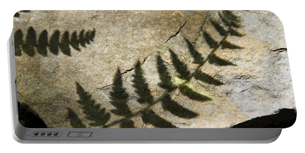 Fern Portable Battery Charger featuring the photograph Forest Fern Shadows by Christina Rollo