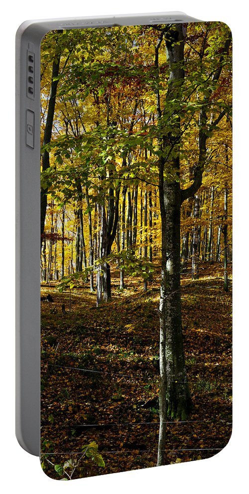 Autumn Portable Battery Charger featuring the photograph Forest Floor Two by Tim Nyberg