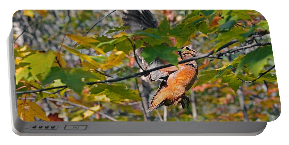 American Woodcock Portable Battery Charger featuring the photograph Forest's Timberdoodle by Asbed Iskedjian