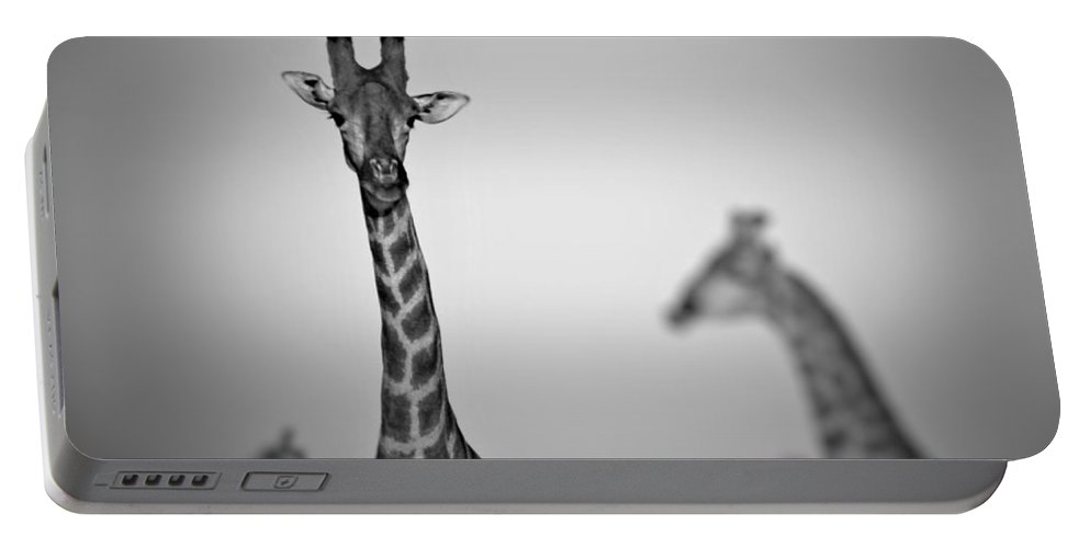 Portable Battery Charger featuring the photograph Four Giraffes by Katie Seymour