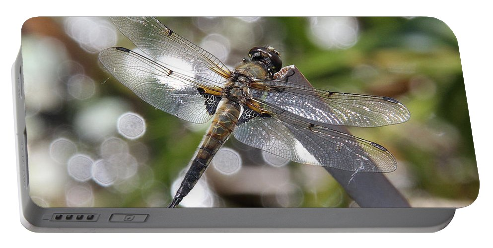 Four-spotted Skimmer Portable Battery Charger featuring the photograph Four-spotted Skimmer by Doris Potter