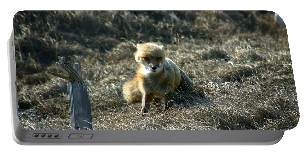 Red Fox Portable Battery Charger featuring the photograph Fox In The Wind by Anthony Jones