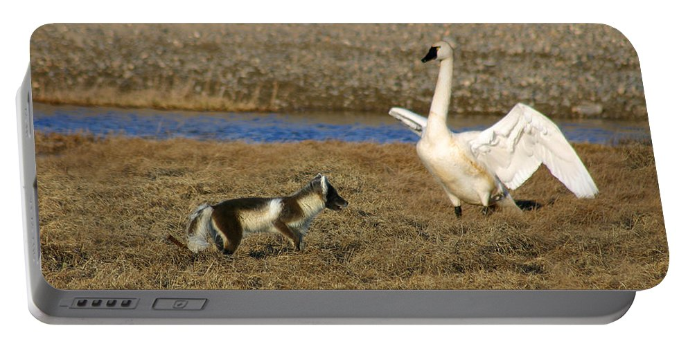 Fox Portable Battery Charger featuring the photograph Fox Vs Swan by Anthony Jones
