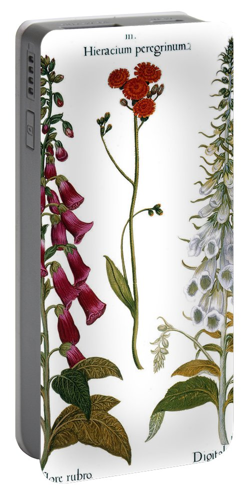 1613 Portable Battery Charger featuring the photograph Foxglove And Hawkweed by Granger