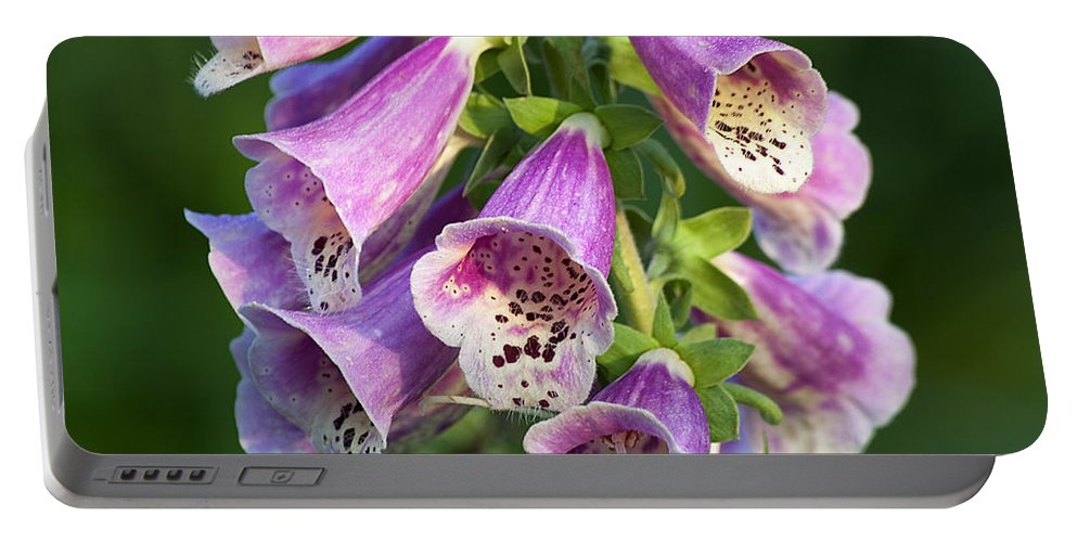 Nature Portable Battery Charger featuring the photograph Foxglove For Artemis by Kenneth Albin