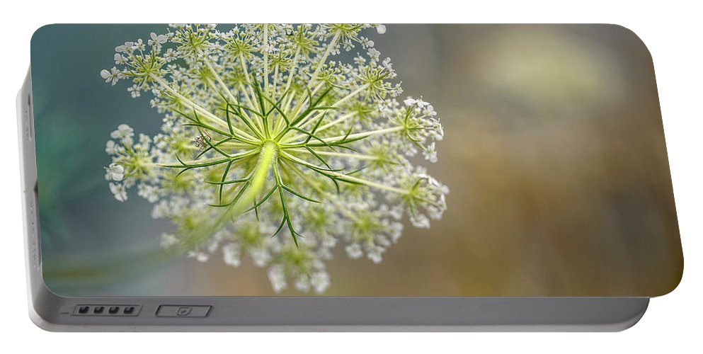 Dill Portable Battery Charger featuring the photograph Fragile Dill Umbels On Summer Meadow by Nailia Schwarz