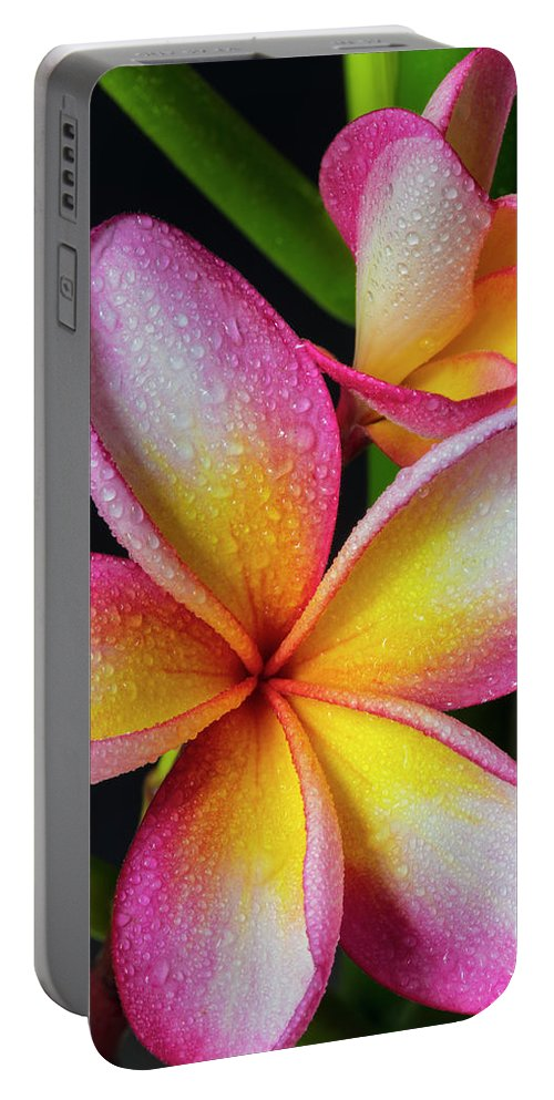 Frangipani Portable Battery Charger featuring the photograph Frangipani After The Rain by Keith Hawley