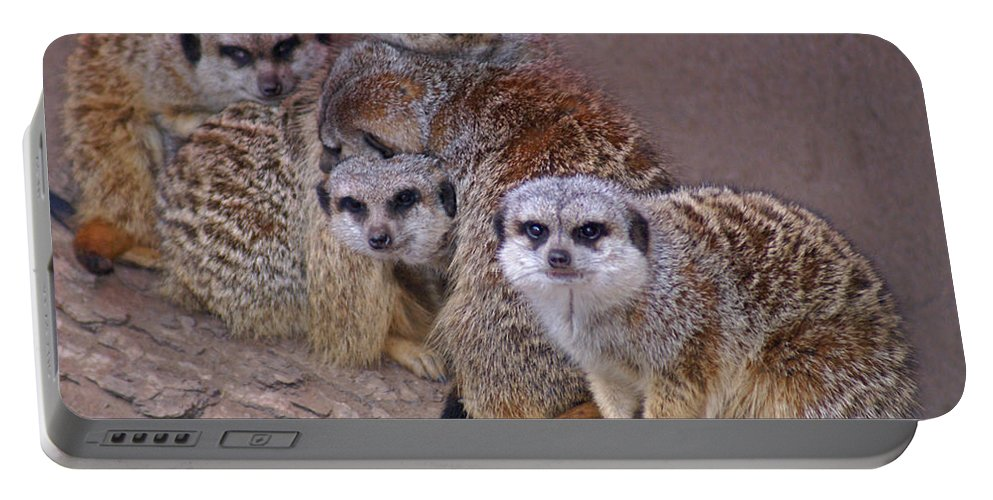Mer Cats Portable Battery Charger featuring the photograph Freezing Meer Cats by Heather Coen