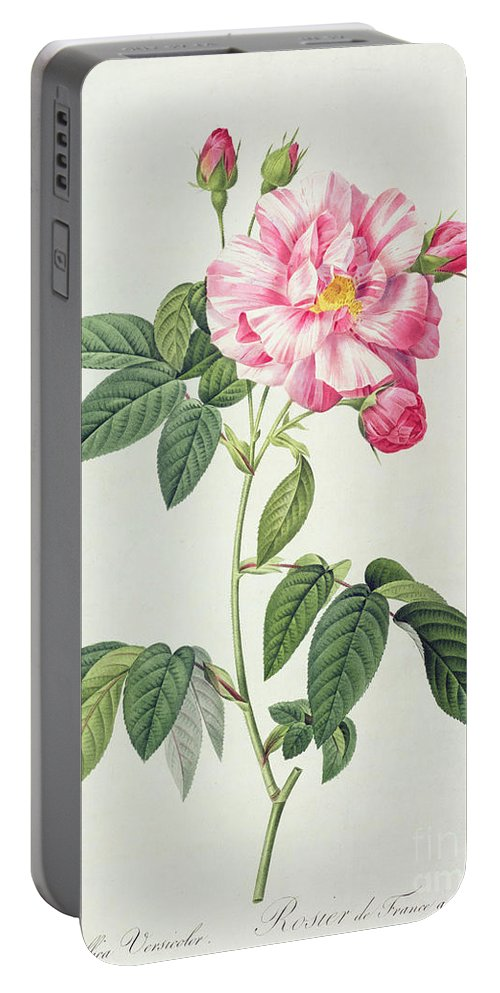 Rosa Portable Battery Charger featuring the drawing French Rose by Pierre Joseph Redoute