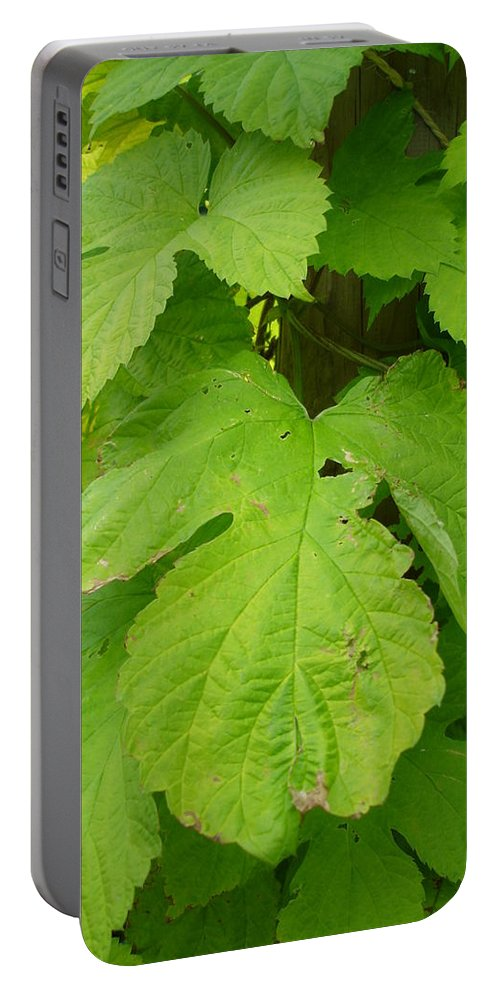 Hop Portable Battery Charger featuring the photograph Fresh English Golden Hop by Susan Baker